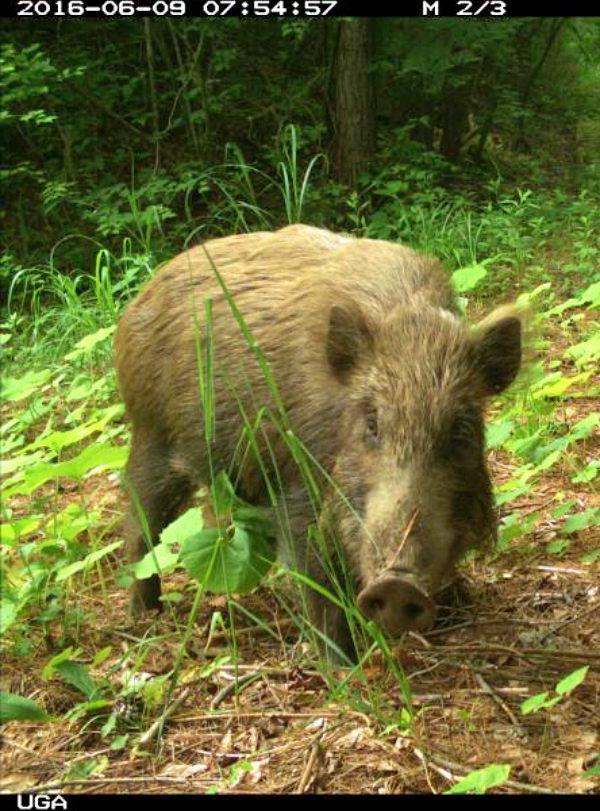 Fukushima. Decenas de especies animales prosperan en los alrededores de la zona