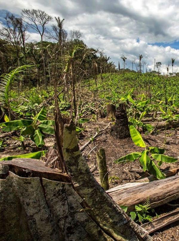 La deforestación 'pasa su factura' al Planeta