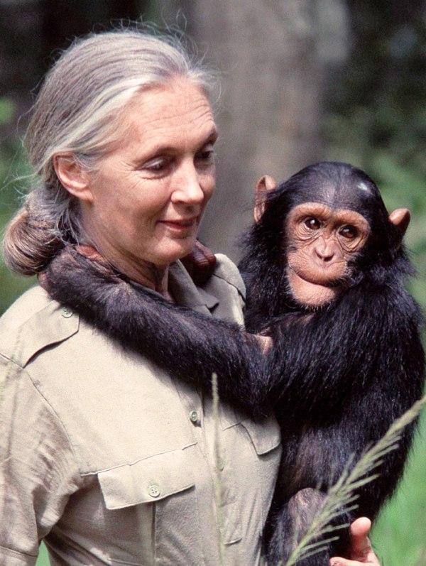 Las 'ramitas' de Jane Goodall