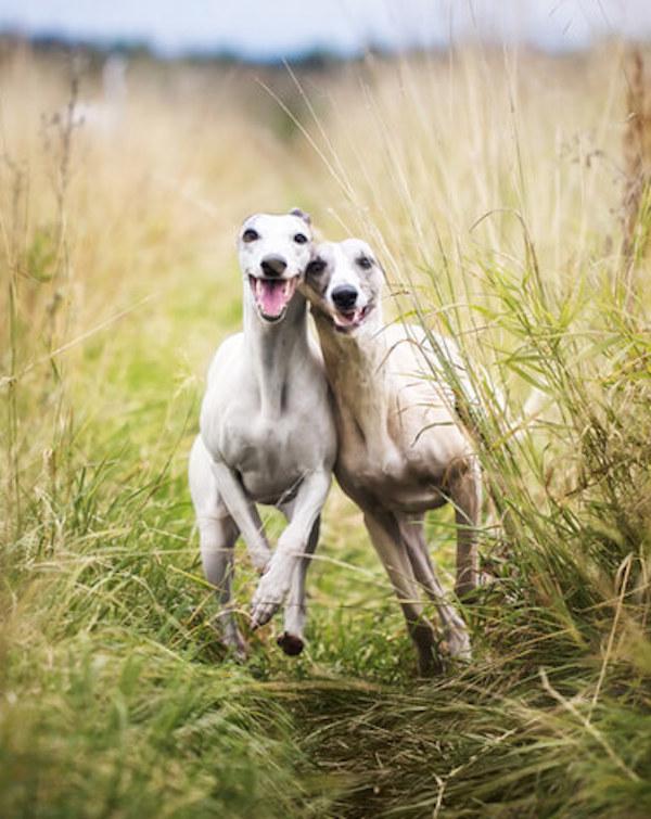 España 'clama' por una ley que proteja a los perros de caza