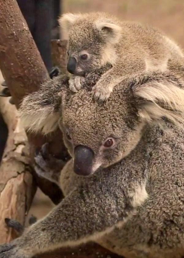 Rafa Nadal y Novak Djokovic se solidarizan con la biodiversidad de Australia