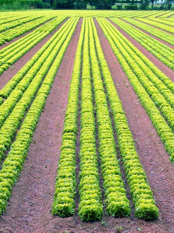 La 'increíble' incompetencia del desarrollo rural y biodiversidad por las CCAA