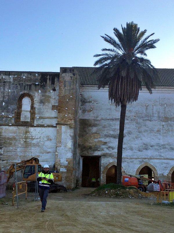 Organizaciones conservacionistas exigen que se repare el daño causado a una colonia de cernícalo primilla en Carmona (Sevilla)