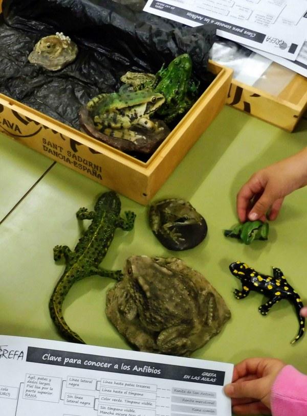 170 colegios e institutos visitaron en 2019 el centro de educación ambiental de GREFA