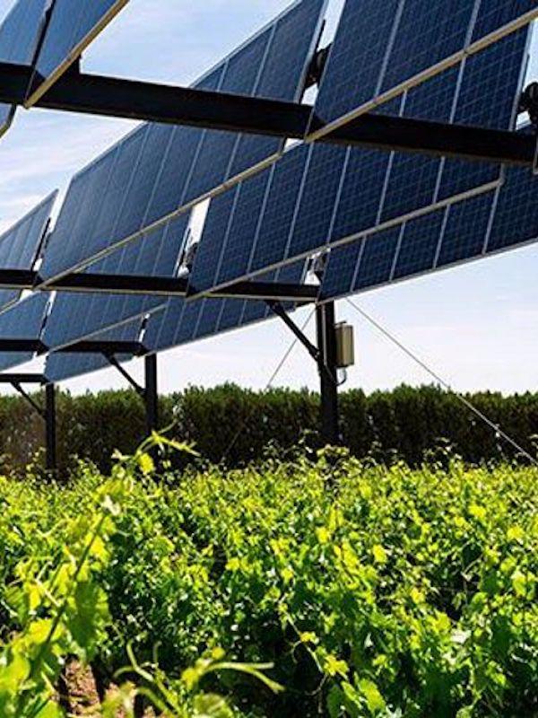 Endesa aplica la agrivoltaica en sus plantas renovables en Andalucía