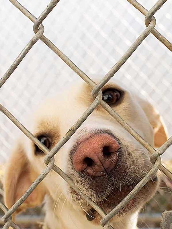 El Gobierno anuncia la puesta en marcha de un sistema de registro de animales que no existe y retrasa la ley de protección animal sin explicación