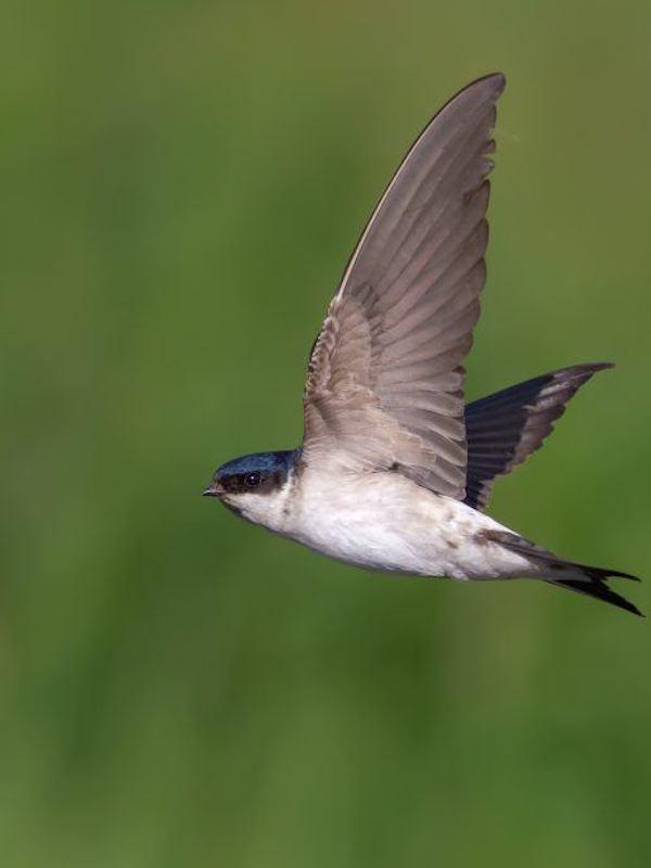 Medidas de convivencia con las aves urbanas