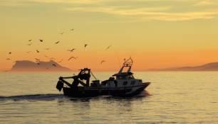 España, ¿será líder en pesca sostenible o en sobrepesca?