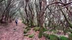 La provincia de Salamanca doblará en los próximos años el número de senderos micológicos