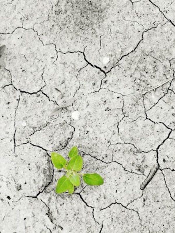 La Ley de Cambio Climático prevé abordar una reforma del sector eléctrico en un año desde su entrada en vigor