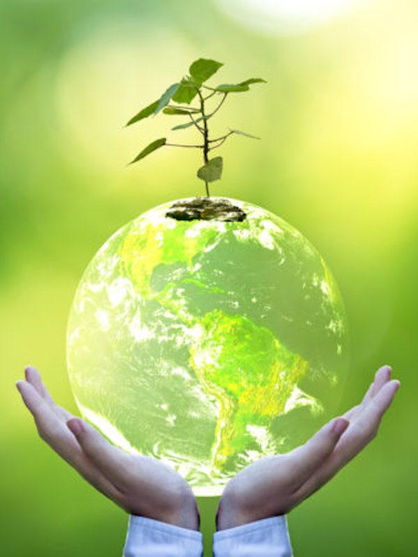 Nuevos programas formativos en Medio ambiente y Sostenibilidad de EOI