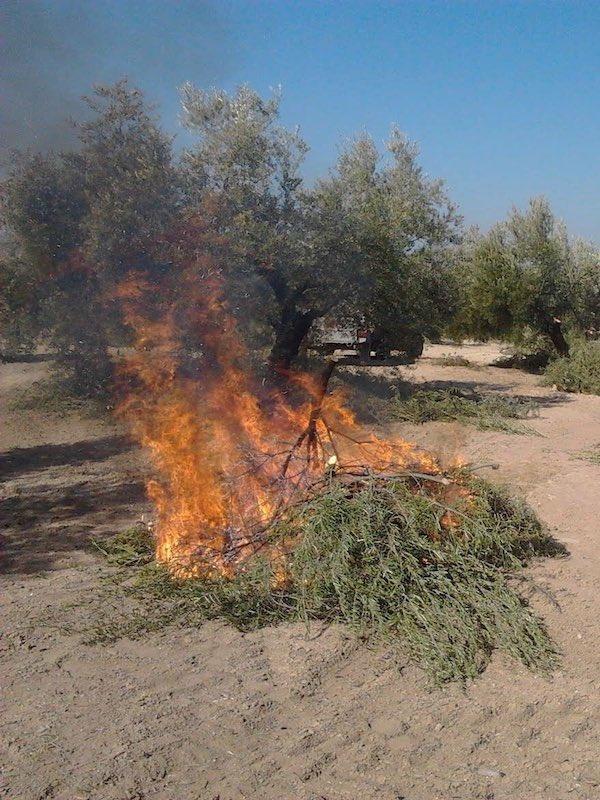 La Junta prorroga hasta final de abril las autorizaciones de empleo de fuego en terrenos forestales de Córdoba