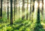 Eklipse, Europa quiere implicarse en el conocimiento sobre la biodiversidad
