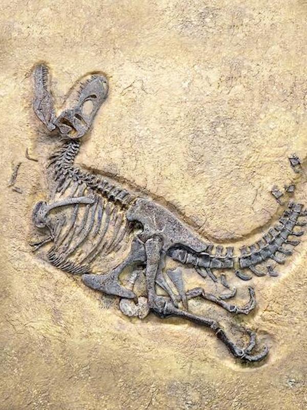 Descubren una nueva especie de dinosaurio en la Patagonia