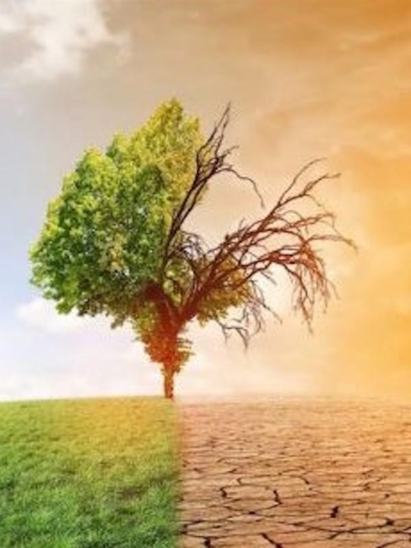 Una ley de cambio climático 'manifiestamente mejorable'