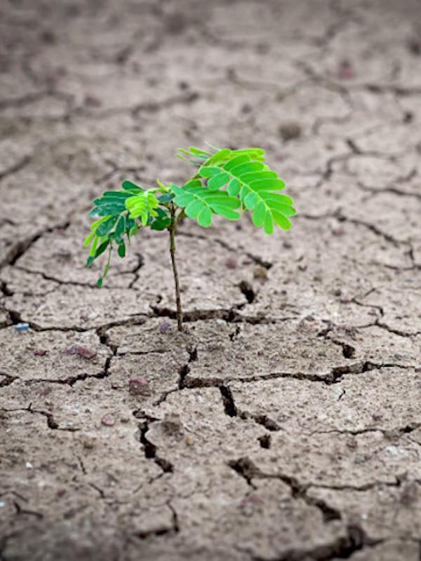 Narcolepsia generalizada en España sobre la 'Ley de Cambio Climático'