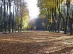Granada forma en la gestión de arbolado urbano