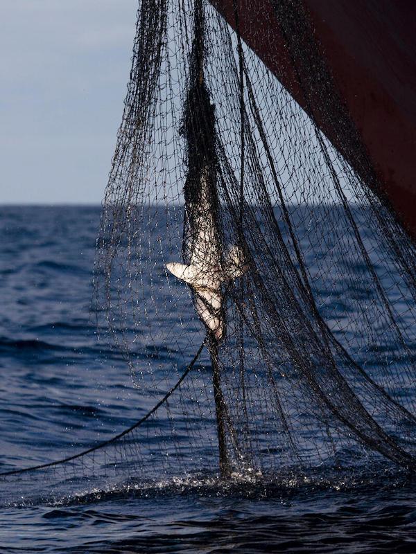El océano Índico  'arrasado' por la pesca industrial
