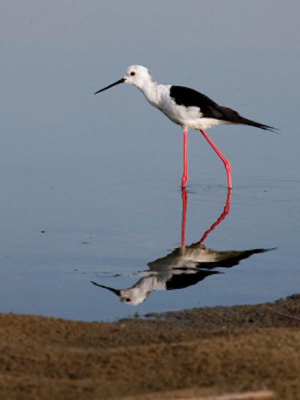 Estany Pudent de Formentera en el punto de mira de SEO/BirdLife
