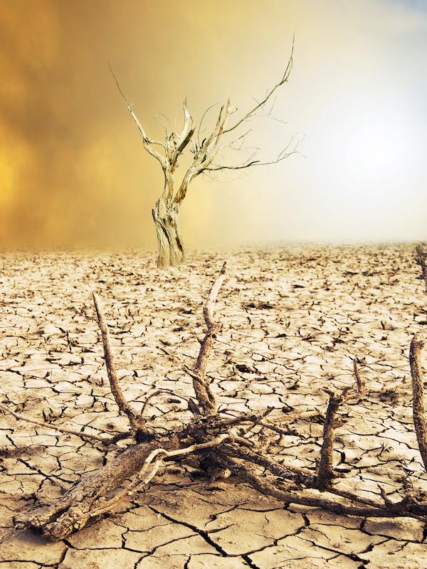 El Grupo Español de Crecimiento Verde opina que el empleo verde crecerá con la ley de cambio climático