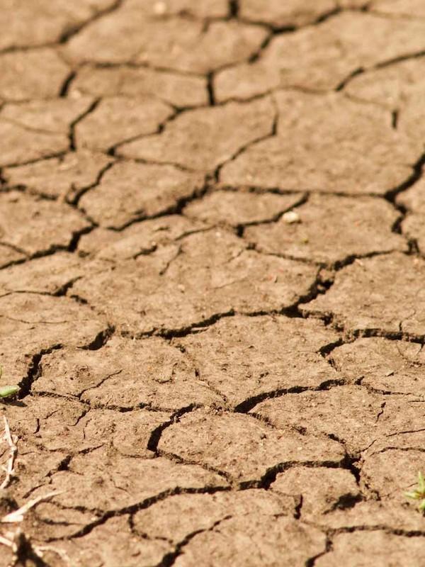 La falta de viento por el cambio climático puede retrasar la caída de las hojas en latitudes altas