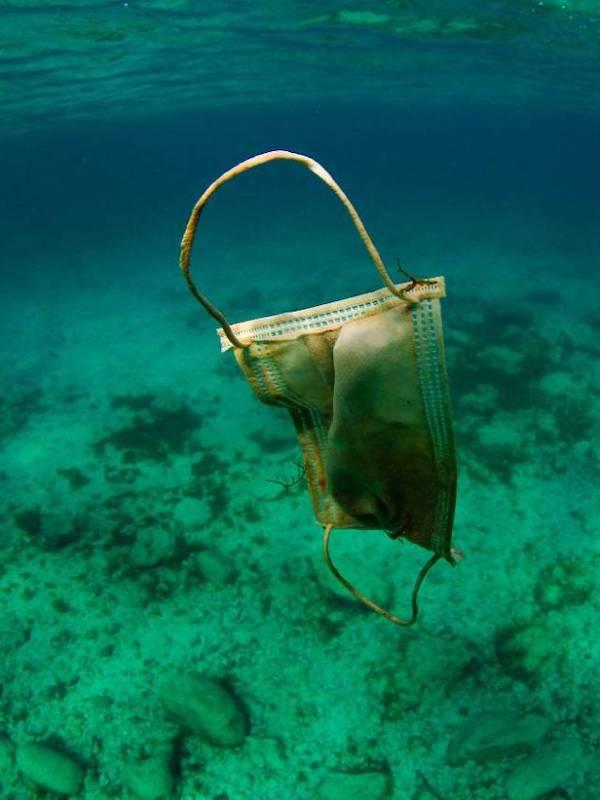 El plástico dentro de las medusas refleja el impacto de la contaminación de los océanos