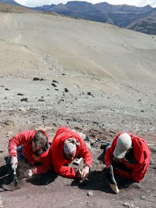Fósiles de una 'bestia' de cinco dientes descubiertos en la Patagonia