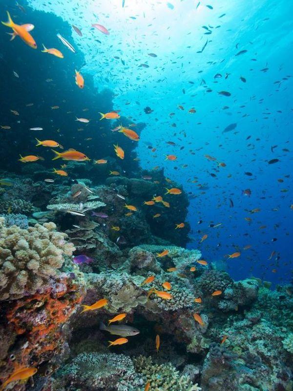 Algunas áreas marinas sin figura de protección medioambiental resultan decisivas para la conservación de especies