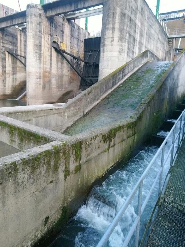 Asturias no se puede permitir la gestión 'errática' sobre del río Nalón a su paso por Oviedo
