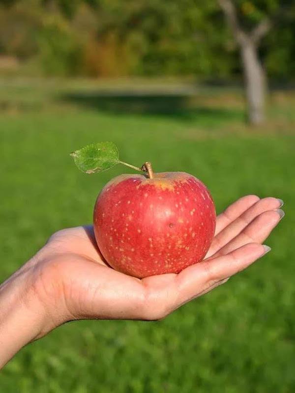 Batidos de frutas ecológicas y de temporada