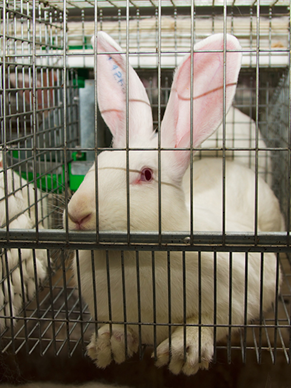 La prohibición de las jaulas para animales de granja recibe un apoyo 'incondicional' en el Parlamento Europeo