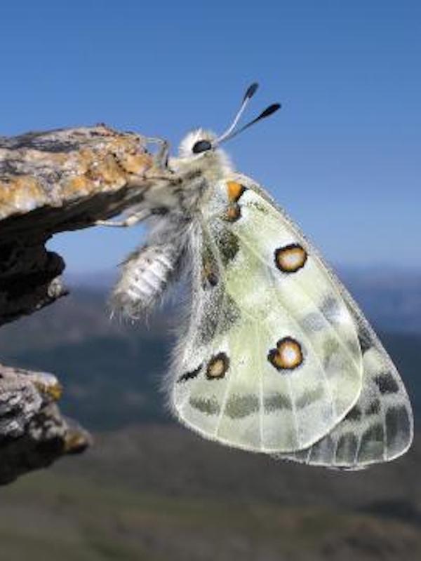 Logroño apoya dos 'Oasis de mariposas'