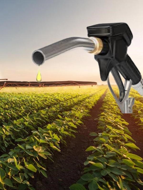 Gremios de granos y soya de EE. UU. y el IICA capacitaron a técnicos de América Latina y el Caribe en biocombustibles para impulsar matriz energética sustentable en la región