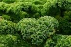Beneficios de la vitamina K y superalimentos que la aportan