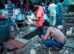 STOP al comercio de animales silvestres en los mercados húmedos
