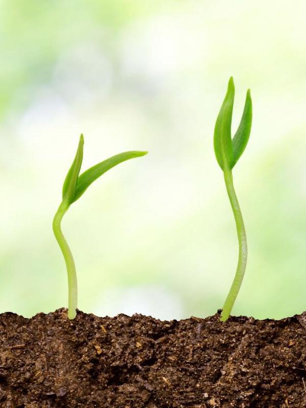 ¿Por qué unas plantas crecen poco y otras menos?