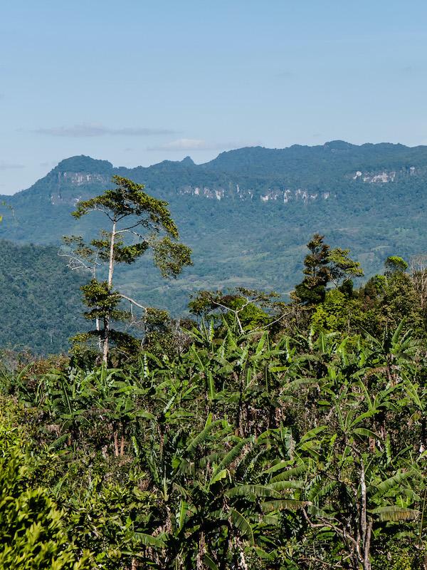 Áreas Naturales Protegidas de México donde puedes ver una gran variedad de aves