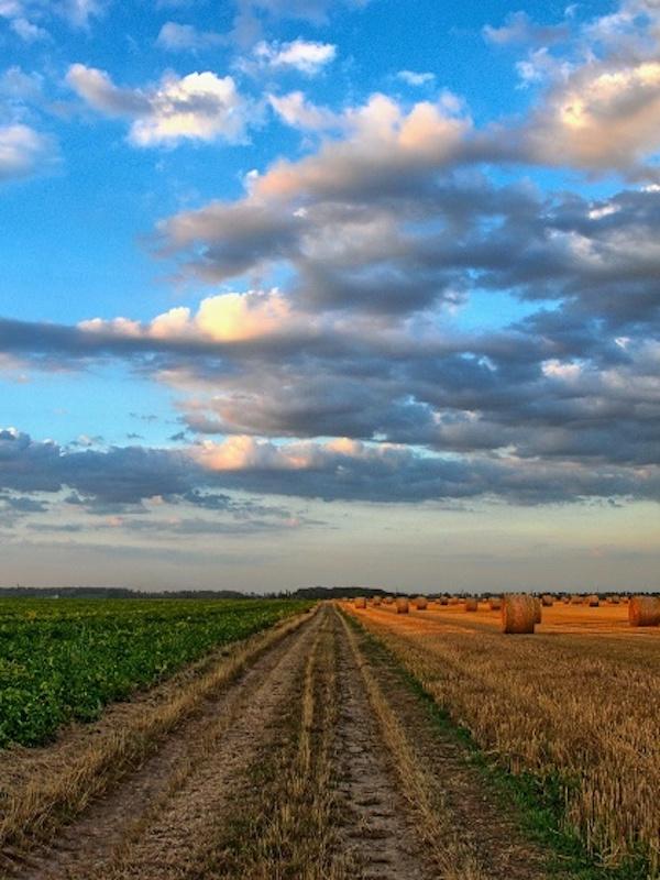 Presentado un estudio que analiza la emisión de gases de efecto invernadero en el sistema agroalimentario español