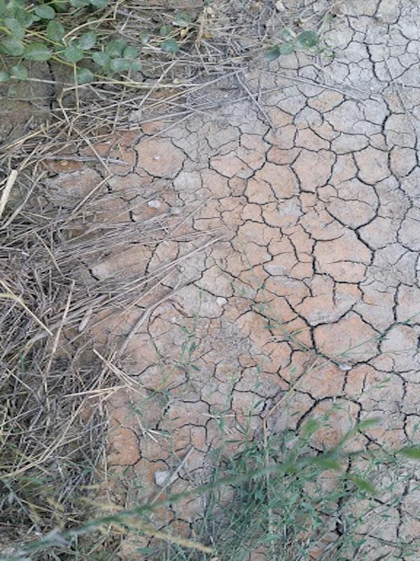 Cambio climático: ¿en qué se diferencian mitigación y adaptación?