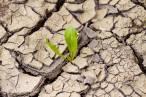 Las 'Regiones de Europa' buscaran la cooperación con las administraciones locales para conseguir los objetivos climáticos