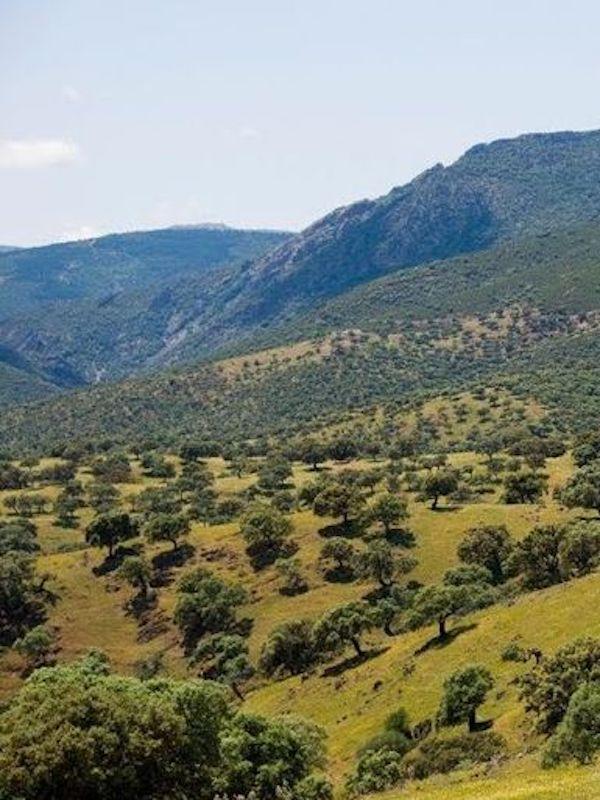 Hacia una ley de Protección, Gestión, Ordenación y Fomento del Paisaje de Castilla-La Mancha