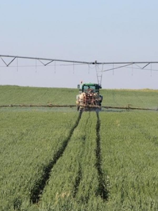 El Gobierno actualiza la legislación en materia de productos fitosanitarios para aumentar la calidad y seguridad de los alimentos
