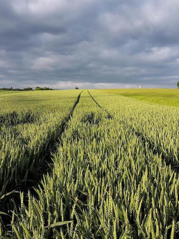 Tractores eléctricos para un agro sostenible