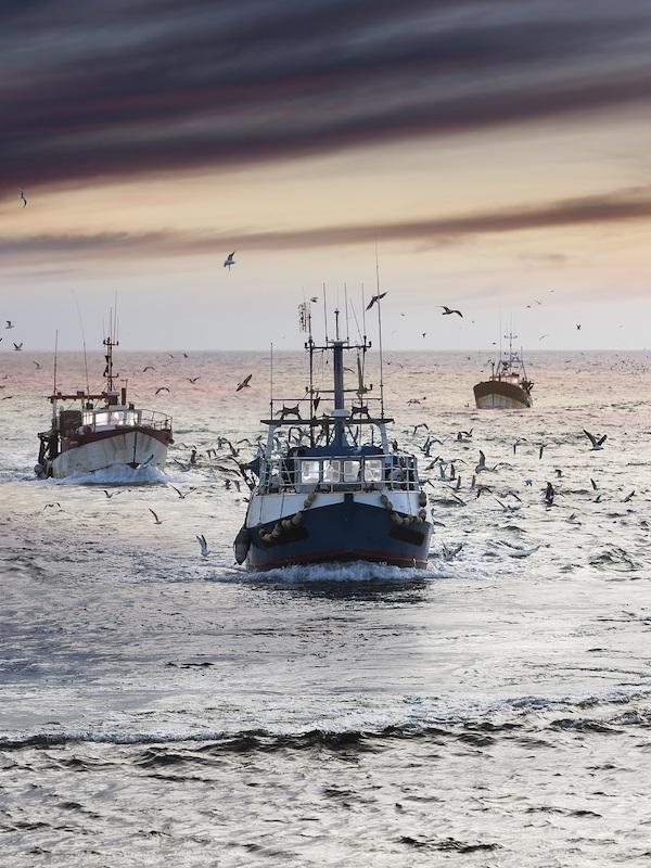 La 'Ley de Pesca Sostenible' genera dudas entre las ONG