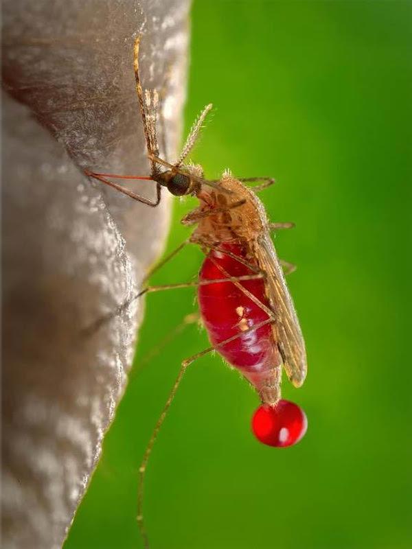 Día Mundial del Paludismo 2021 y el 'Cambio Climático'