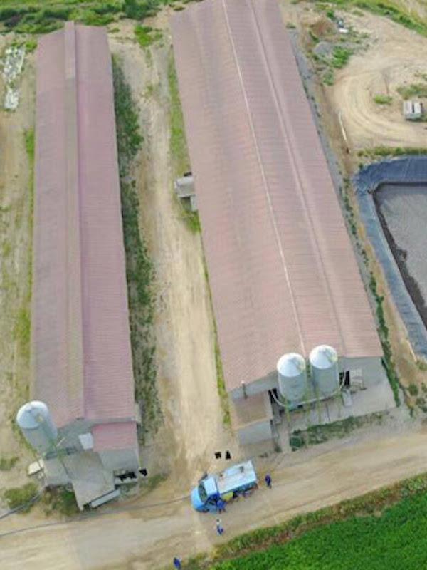 En México denunciadas casi 50 granjas industriales por daños ambientales