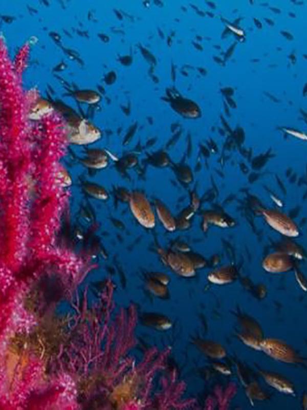Fundación Biodiversidad implementa el proyecto LIFE INTEMARES en Andalucía