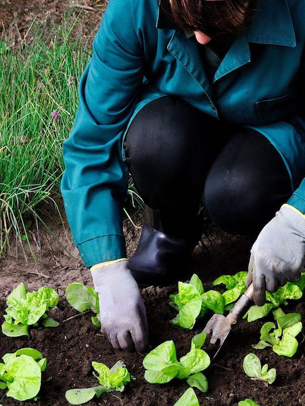 Los cultivos de producción ecológica en Catalunya se duplican en 6 años y ya llegan a las 257.000 hectáreas