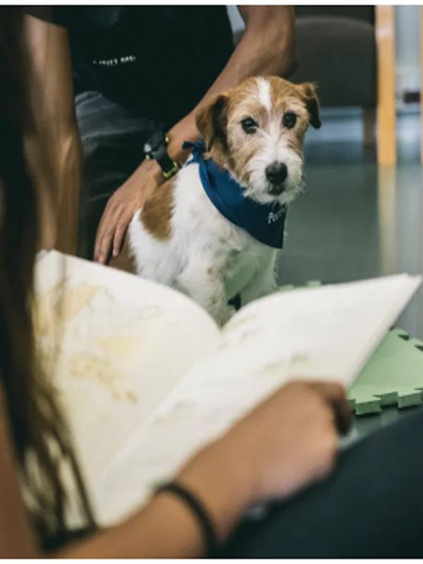 Los animales son una potente herramienta que ayuda en la reinserción de jóvenes y adolescentes
