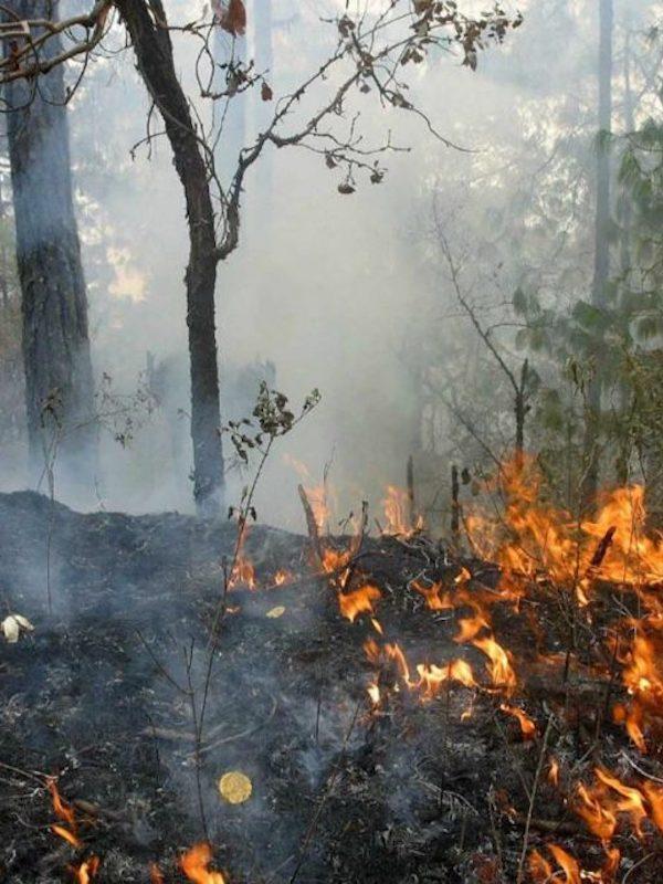 Plantar 3.000 millones de árboles en Europa puede aumentar el riesgo de incendio forestal